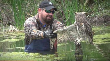 Kanadına Misina Dolanan Baykuşu Kurtarınca Baykuş Bakın Ne Tepki Verdi
