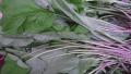 Yılan veya yabani bir hayvan ısırmasına karşı yara iyileştirici özelliği olan şifalı bitki
