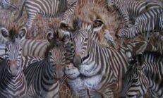 Hızlıca Fotoğrafa Bakın,Gördüğünüz İlk Hayvan Kişiliğinizle İlgili Bakın Nasıl Bilgiler Veriyor