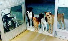 4 Köpek Hastanede Tedavi Gören Sahiplerinin Girişte Böyle Bekledi – Fotoğraf Görenleri Duygulandırdı