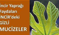 İncir Yaprağı Faydaları – İNCİR'deki Gizli Faydaları