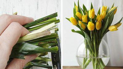 Lalelerinizin Ömrünü Uzatın – Herkesin Bilmesi Gereken ve Çiçekçilerin Kullandığı O Yöntemler