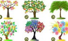 Bu Ağaçlardan – Hangisi Size Daha Hoş Geliyor? Seçtiğiniz Ağacın -Saklı Anlamını İyi Okuyun!