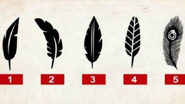 Hassas Yanınızı Ortaya Döken Tüy Testi-Hangi Tüyü Seçerdiniz?