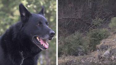 Trafik K-azasında Bacağı Kırılan Sahibini 40 Saat Boyunca Çakallardan Koruyan Köpek Yılın En Sadık Köpeği Seçildi