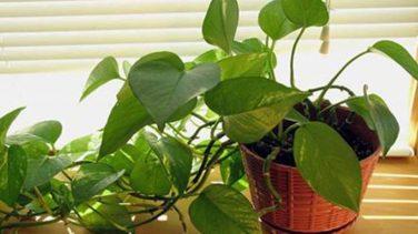 Sağlığa Faydalı 6 Harika Çiçek