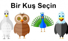 Seçtiğiniz Kuş, Kişiliğinizle İlgili Gerçekleri Ortaya Çıkarıyor