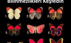 Kelebeklerden birini seçin ve bilinçaltınızda yatan bilinmezi keşfedin