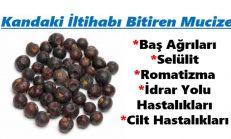 Kandaki İltihabı Yok- Eden Doğa Üstü Meyve.
