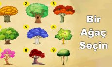 Sadece Bir Ağaç Seçin Ve Anlamını Okuyun! Sizi Nelerin Beklediğini Öğreneceksiniz