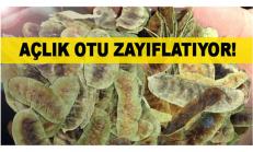 Şifa deposu açlık otu bitkisi bağırsakları çalıştırarak etkili şekilde zayıflatıyor…