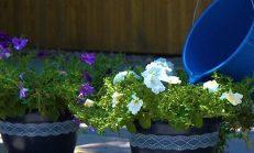 Bitkilerinizi Canlandıracak ve Daha da Büyütecek Karışım