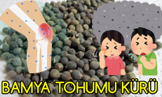 Dizlerde Sıvı Kaybı Ve Bronşitin Bir Numaralı Ilacı: BAMYA TOHUMU KÜRÜ