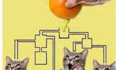 Portakal suyunu ilk önce hangi kedi içer..?
