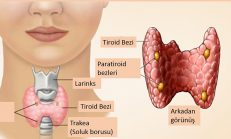 Her Kadının Bilmesi Gereken Tiroit hastalığı belirtileri nelerdir?