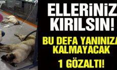 Ankara Batıkent'te Zehirlenen Köpeklerle İlgili 1 Kişi G-ö-z-a-ltına Alındı