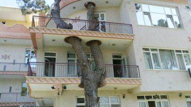Ağaç Kesmeyi Reddeden Mimarların Bulduğu Müthiş Çözümler