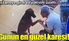Yer: İstanbul… Yaralı köpek eczacıdan böyle yardım istedi